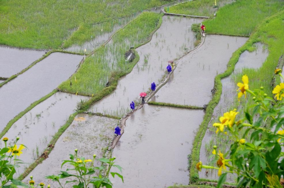 Rando entre les rizières à Batad