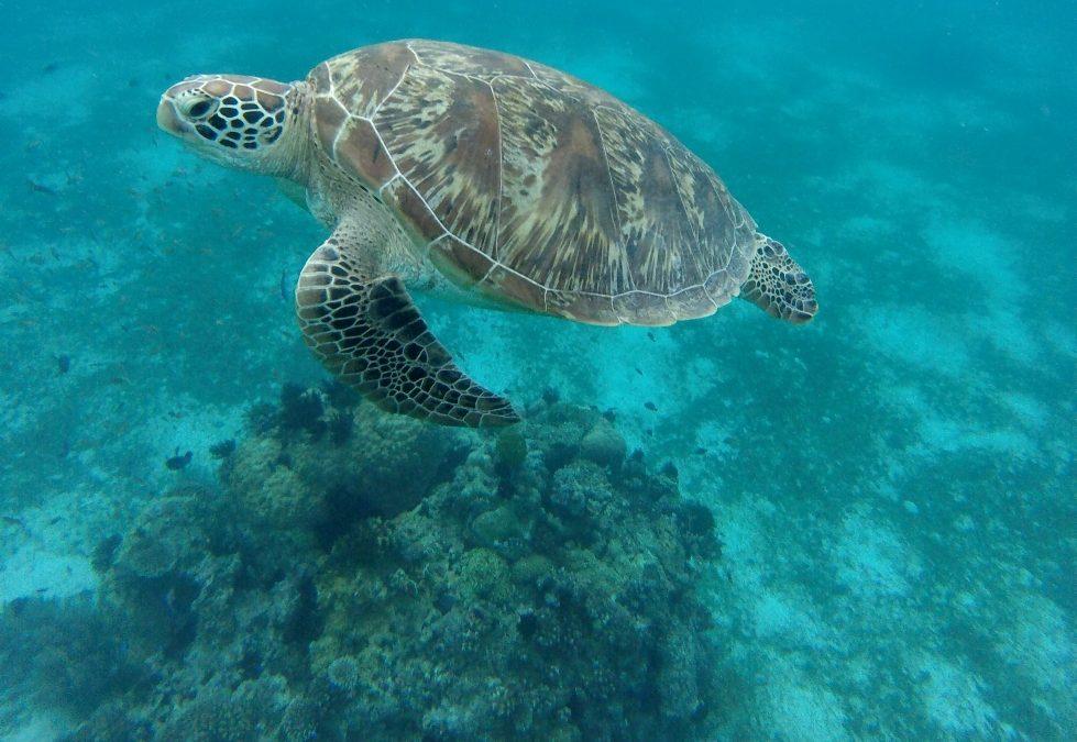L'île de Bohol   Philippines