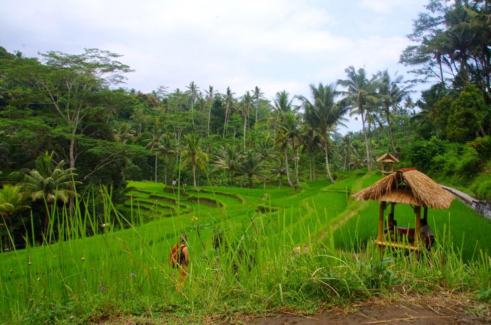 Découvrir Bali en 8 jours